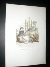 Grandville des Animaux 1842 Hand Col Print. Stepmother Bird & Slave Daughters